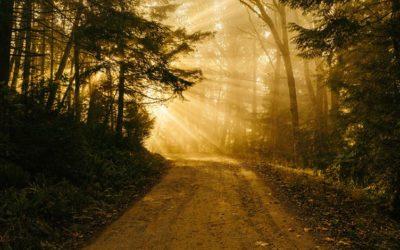« Je suis le Chemin, la Vérité et la Vie »