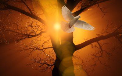 Homélie de la Pentecôte