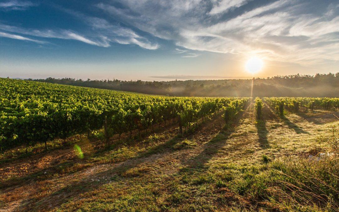 «Va travailler aujourd'hui à ma vigne» (Mt 21, 28-32)